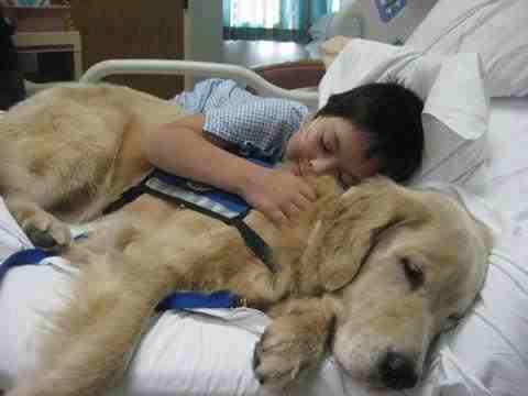 A boy sleeping beside a dog
