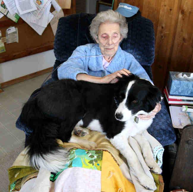 A dog lying on an elderly woman's lap